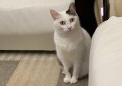 幸運の招き猫が【良縁】を運んできます♬
